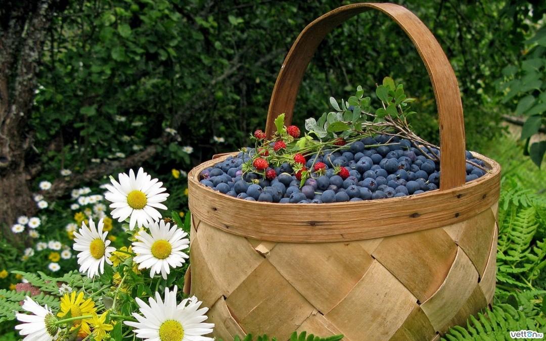 Окрестные леса Новой Ладоги богаты грибами и ягодами